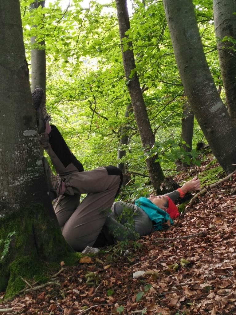 arbre_que_recolza